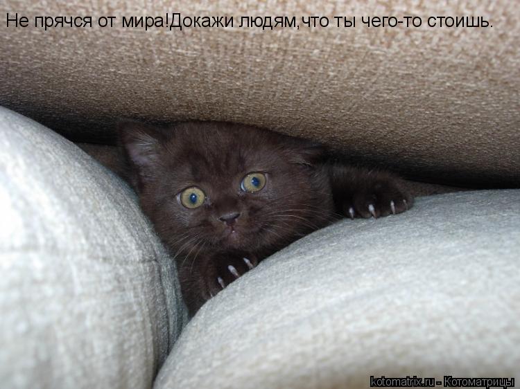Котоматрица: Не прячся от мира!Докажи людям,что ты чего-то стоишь.