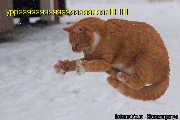 Котоматрица: урряяяяяяяяяяяяяяяяяяяяя!!!!!!!!