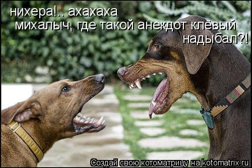 Котоматрица: нихера!.. ахахаха михалыч, где такой анекдот клёвый надыбал?!