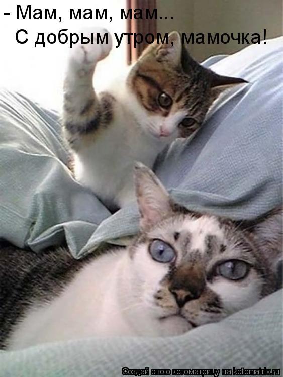 Котоматрица: - Мам, мам, мам... С добрым утром, мамочка!