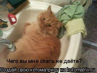Котоматрица: Чего вы мне спать не даёте?