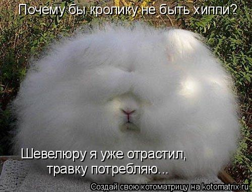 Котоматрица: Почему бы кролику не быть хиппи? Шевелюру я уже отрастил,  травку потребляю...