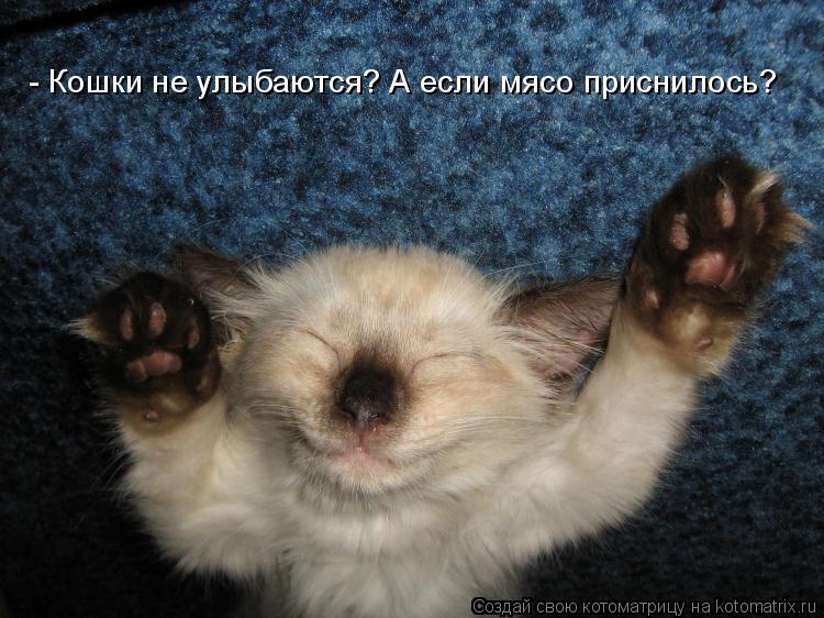 Котоматрица: - Кошки не улыбаются? А если мясо приснилось?