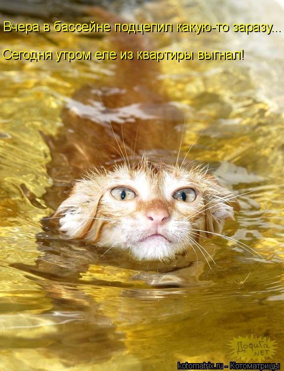 Котоматрица: Вчера в бассейне подцепил какую-то заразу... Сегодня утром еле из квартиры выгнал!