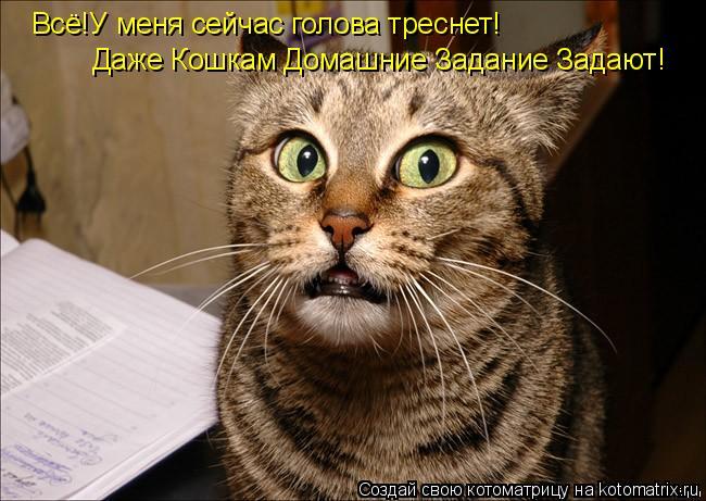 Котоматрица: Всё!У меня сейчас голова треснет! Даже Кошкам Домашние Задание Задают!