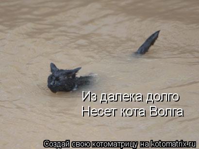 Котоматрица: Из далека долго Несет кота Волга