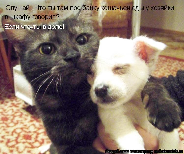 Котоматрица: Слушай...Что ты там про банку кошачьей еды у хозяйки в шкафу говорил? Если что-ты в доле!