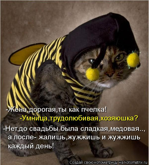 Котоматрица: -Жена,дорогая,ты как пчелка! -Умница,трудолюбивая,хозяюшка? -Нет,до свадьбы была сладкая,медовая.., а после- жалишь,жужжишь и жужжишь  каждый д