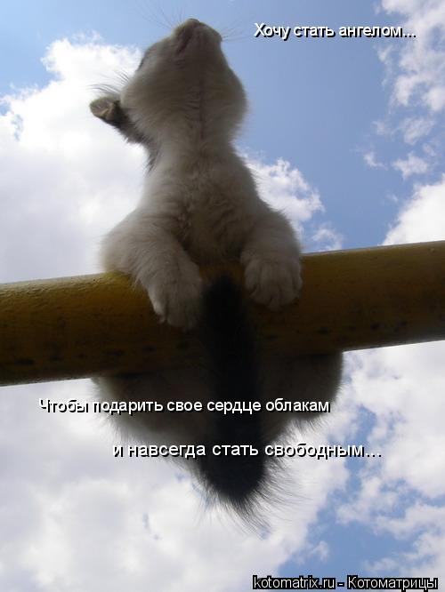 Котоматрица: Хочу стать ангелом... Чтобы подарить свое сердце облакам  и навсегда стать свободным...