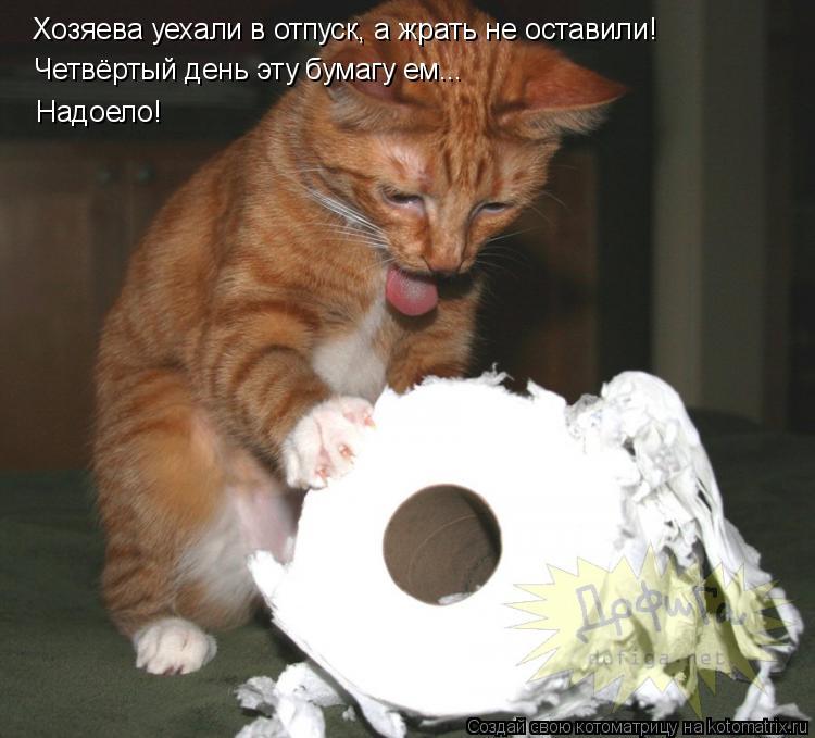 Котоматрица: Хозяева уехали в отпуск, а жрать не оставили! Четвёртый день эту бумагу ем... Надоело!
