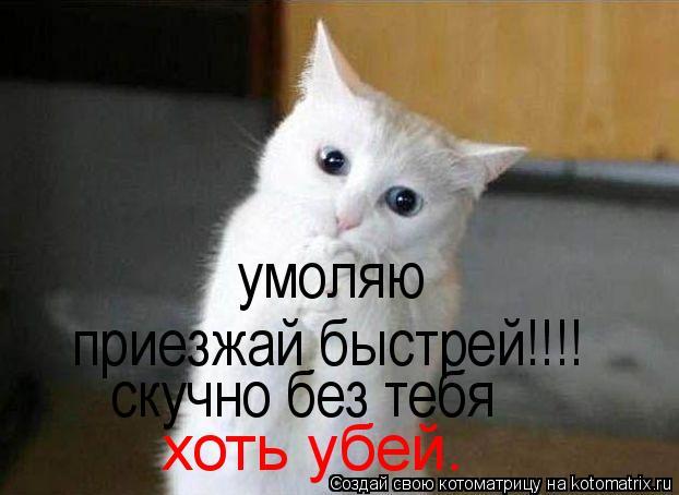 Котоматрица: умоляю приезжай быстрей!!!! скучно без тебя хоть убей.