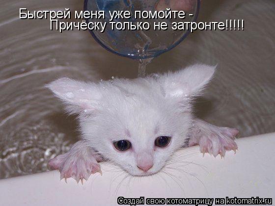 Котоматрица: Быстрей меня уже помойте - Причёску только не затронте!!!!!