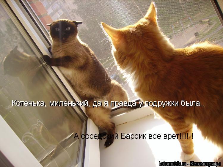 Котоматрица: Котенька, миленький, да я правда у подружки была.. А соседский Барсик все врет!!!!!!