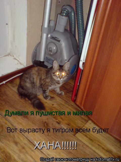 Котоматрица: Думали я пушистая и милая Вот вырасту я тигром всем будет ХАНА!!!!!!