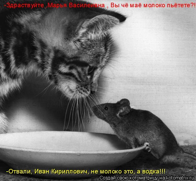 Котоматрица: -Здраствуйте ,Марья Василеивна , Вы чё маё молоко пьётете?! -Отвали, Иван Кириллович, не молоко это, а водка!!!
