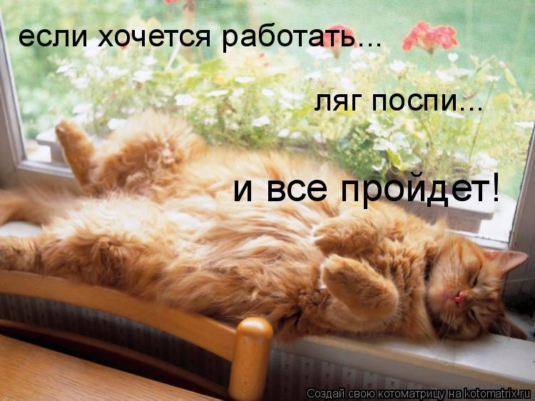 Котоматрица: если хочется работать... ляг поспи... и все пройдет!