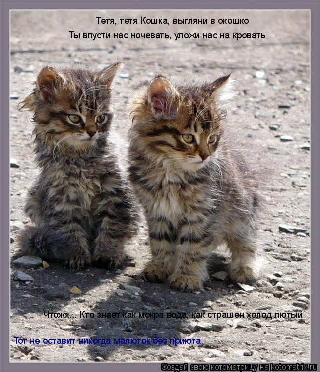 Котоматрица: Тетя, тетя Кошка, выгляни в окошко Ты впусти нас ночевать, уложи нас на кровать Чтож..... Кто знает как мокра вода, как страшен холод лютый Тот