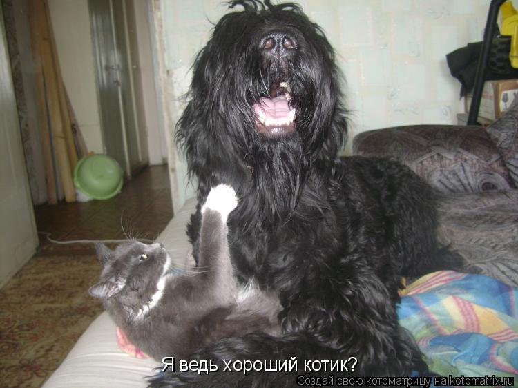 Котоматрица: Я ведь хороший котик?