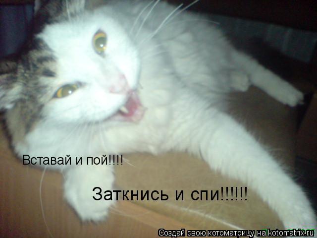 Котоматрица: Вставай и пой!!!! Заткнись и спи!!!!!!