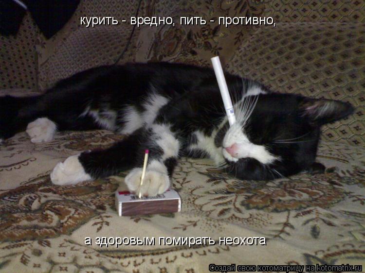 Котоматрица: курить - вредно, пить - противно, а здоровым помирать неохота