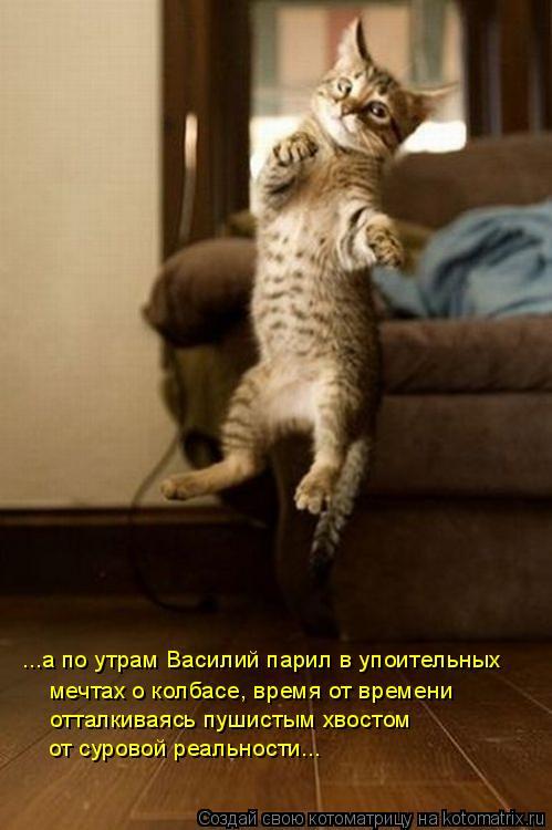 Котоматрица: ...а по утрам Василий парил в упоительных  мечтах о колбасе, время от времени  отталкиваясь пушистым хвостом  от суровой реальности...