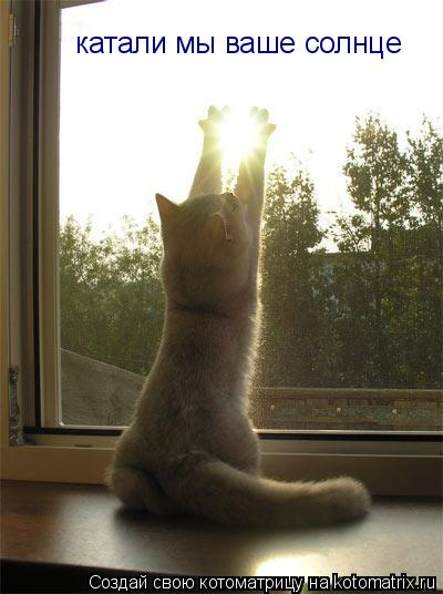 Котоматрица: катали мы ваше солнце