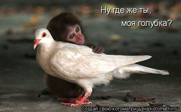 Котоматрица: Ну где же ты,  моя голубка?