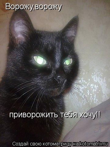 Котоматрица: Ворожу,ворожу приворожить тебя хочу!!