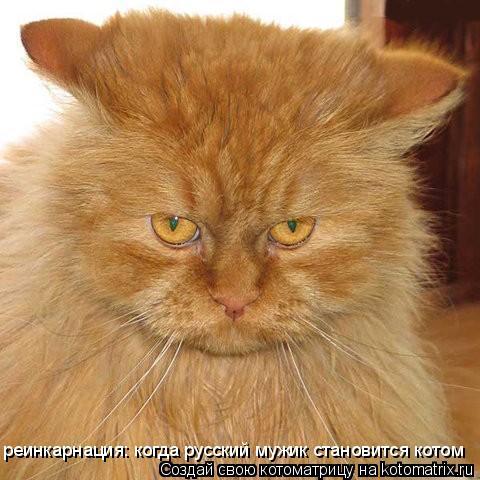 Котоматрица: реинкарнация: когда русский мужик становится котом