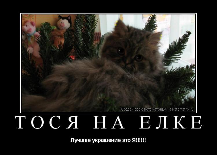 Котоматрица: Тося на ёлке Лучшее украшение это Я!!!!!!