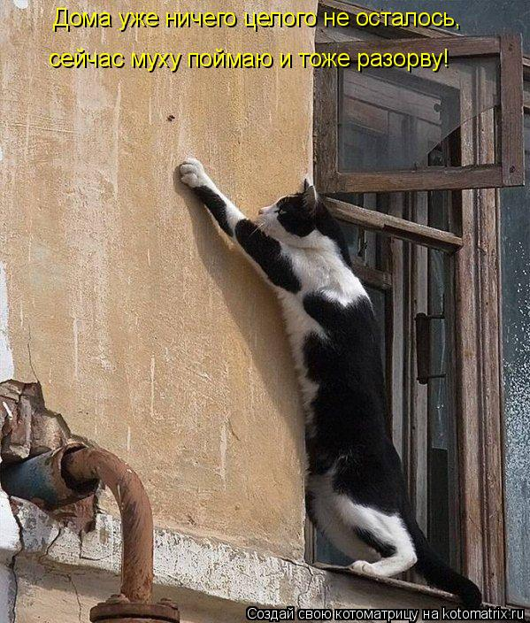 Котоматрица: Дома уже ничего целого не осталось, сейчас муху поймаю и тоже разорву!