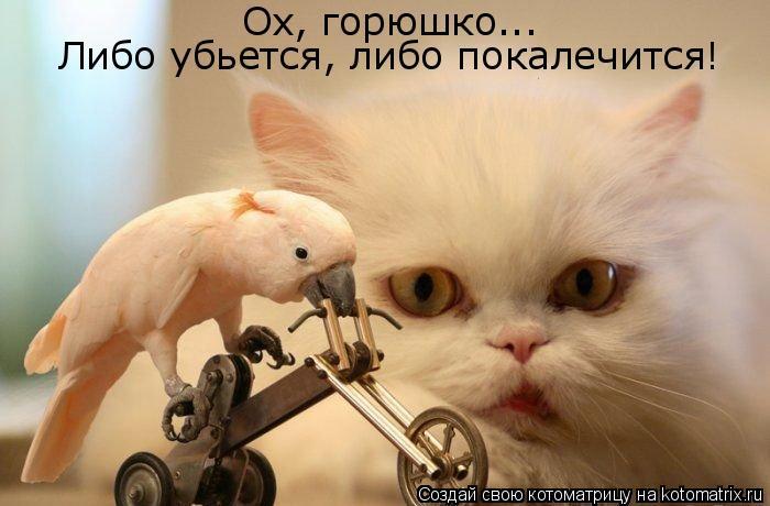 Котоматрица: Ох, горюшко... Либо убьется, либо покалечится!