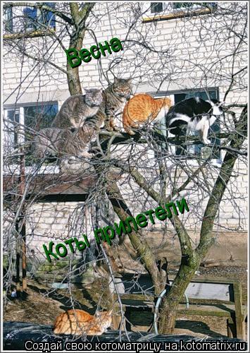 Котоматрица: Весна Коты прилетели