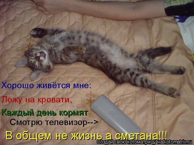 Котоматрица: Хорошо живётся мне:  Лежу на кровати, Каждый день кормят Смотрю телевизор--> В общем не жизнь а сметана!!!
