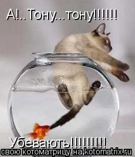 Котоматрица: А!..Тону...тону!!!!!! Убевають!!!!!!!!!