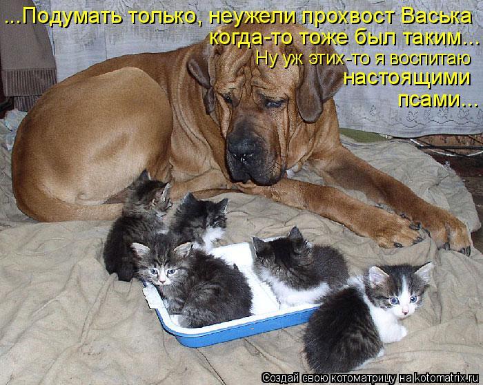 Котоматрица: ...Подумать только, неужели прохвост Васька когда-то тоже был таким... Ну уж этих-то я воспитаю настоящими псами...