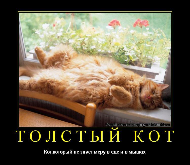 Котоматрица: ТОЛСТЫЙ КОТ Кот,который не знает меру в еде и в мышах