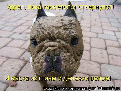 Котоматрица: Удрал, пока косметолог отвернулся! И маска из глины и денежки целые!