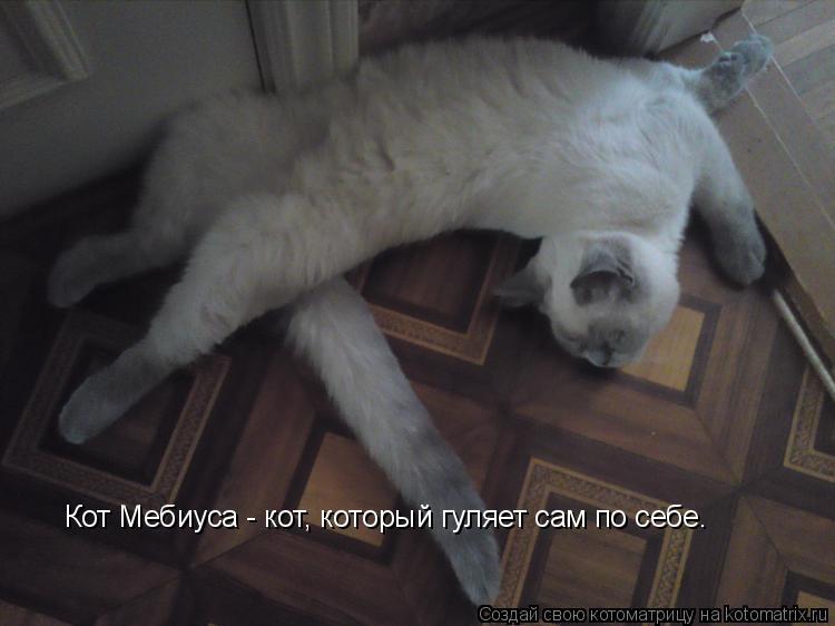 Котоматрица: Кот Мебиуса - кот, который гуляет сам по себе.