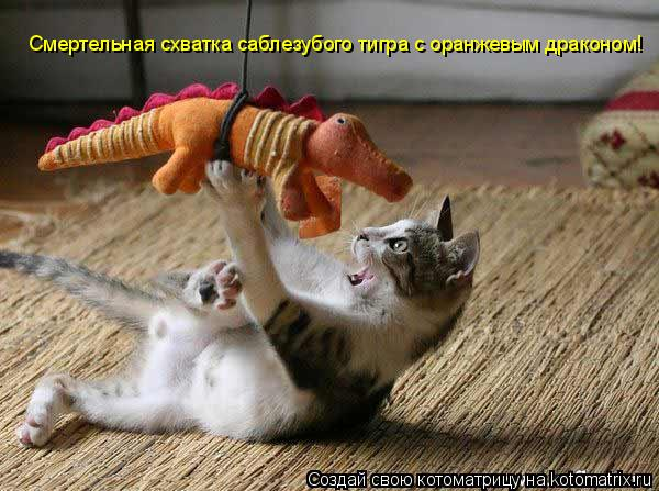Котоматрица: Смертельная схватка саблезубого тигра с оранжевым драконом!