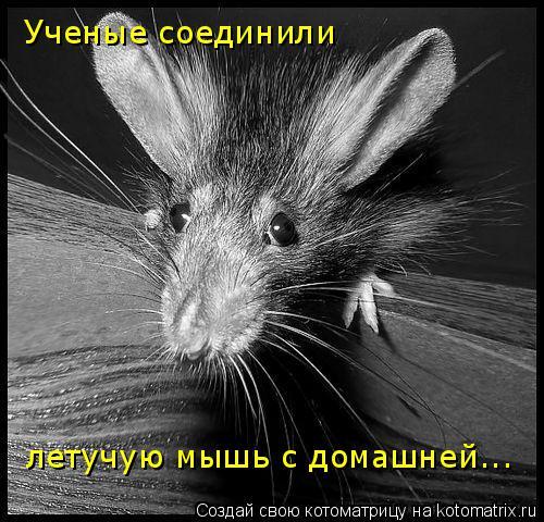 Котоматрица: Ученые соединили  летучую мышь с домашней...