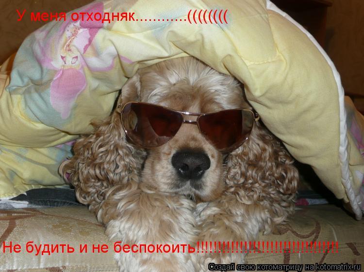 Котоматрица: У меня отходняк............(((((((( Не будить и не беспокоить!!!!!!!!!!!!!!!!!!!!!!!!!!!!!!!!!