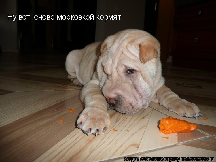 Котоматрица: Ну вот ,сново морковкой кормят