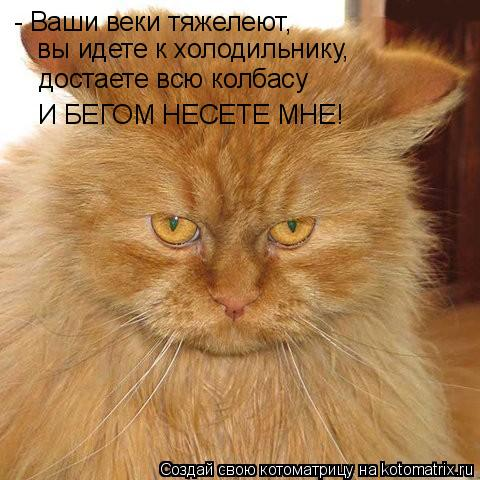 Котоматрица: - Ваши веки тяжелеют,  вы идете к холодильнику, достаете всю колбасу И БЕГОМ НЕСЕТЕ МНЕ!