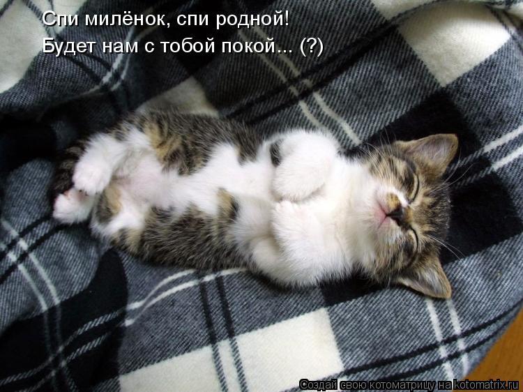 Котоматрица: Спи милёнок, спи родной! Будет нам с тобой покой... (?)