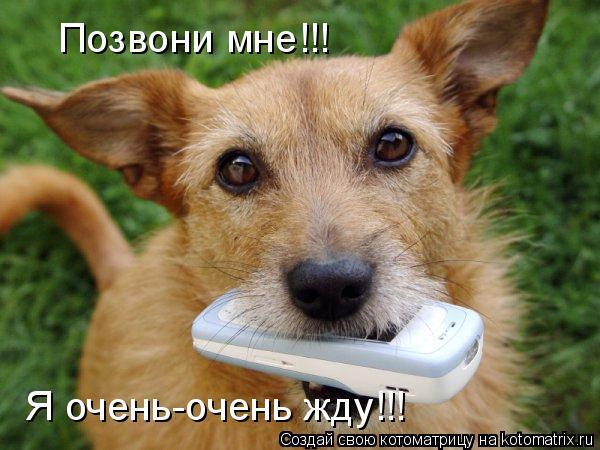 Котоматрица: Позвони мне!!! Я очень-очень жду!!!
