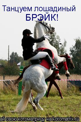 Котоматрица: Танцуем лошадиный БРЭЙК!