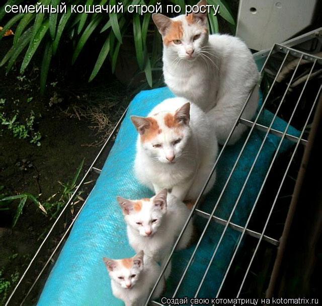 Котоматрица: семейный кошачий строй по росту.