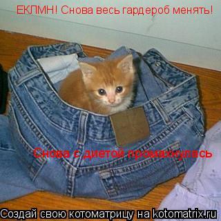 Котоматрица: ЕКЛМН! Снова весь гардероб менять!  Снова с диетой промахнулась
