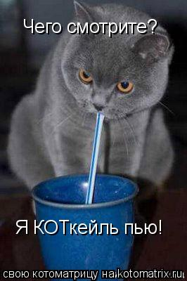Котоматрица: Чего смотрите?  Я КОТкейль пью!